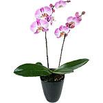 Cliquez sur le bouquet Pink Paradise pour l'agrandir