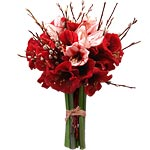 Amaryllis rose et rouge
