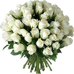 35.00 € : OFFRE EXCEPTIONNELLE ! 10 ROSES EN PLUS :50 roses au lieu de 40 pour 29 € seulement !60 roses au lieu de 50 pour 35 € seulement !Des roses blanches : tout simplement !Du blanc immaculé avec cette brassée simple et élégante de roses 'Akito' ! Ces fleurs fraîches et vigoureuses accompagneront merveilleusement tous vos messages et s'épanouiront joliment au fil des jours.