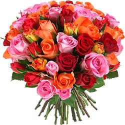 35.00 € : OFFRE EXCEPTIONNELLE ! 10 ROSES EN PLUS :50 roses au lieu de 40 pour 29 € seulement !60 roses au lieu de 50 pour 35 € seulement !Incontournable !Avec cette fleur emblématique, Aquarelle a confectionné une merveilleuse brassée de roses vive et colorée. Découvrez les variétés 'Aqua', 'Valentino', 'Tropical Amazone' et 'Wild Calypso', connues pour leur tenue en vase, leurs teintes incroyables et le parfait épanouissement de leurs boutons. Une composition somptueuse et colorée, idéale pour toute occasion.